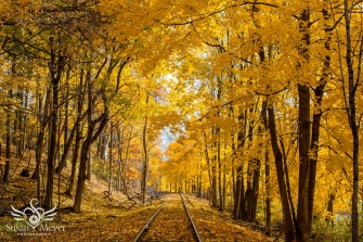 A bandoned Rails in Autumn 2