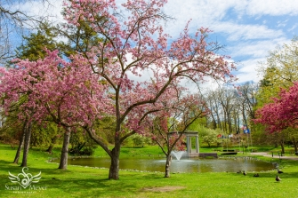 Blooming Day at Congress Park
