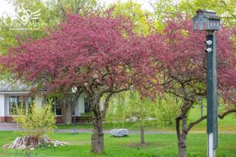 Congress-Park-Springtime