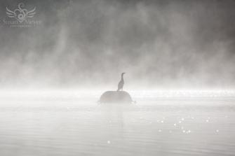 Cormorant-in-the-Mist