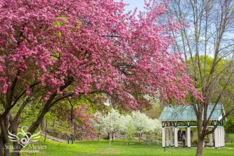High-Rock-Park-Springtime
