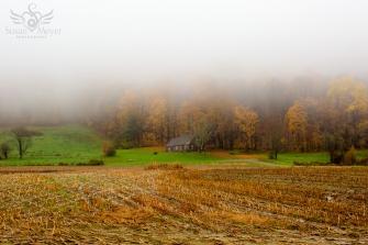 Misty Homestead