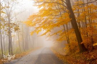 Misty Yellow Foliage