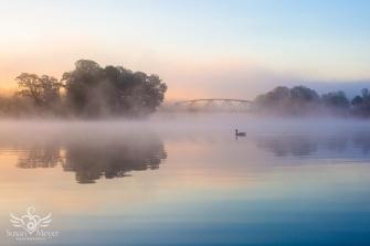 Misty Goose Sunrise
