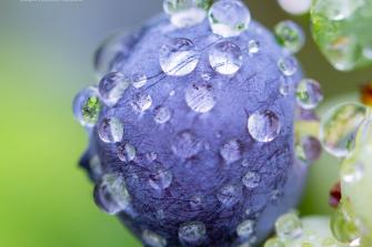 Raindrop-Beaded-Blueberry