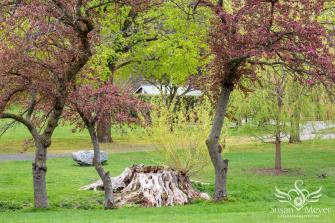 Willow-Stump-Lives-On