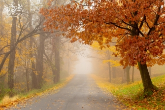 Country Road on a Misty November Morning