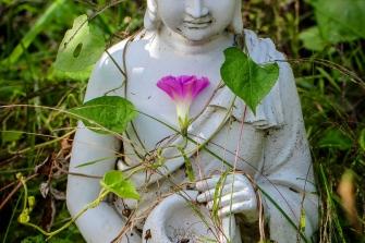 Flowering at Buddhas Heart
