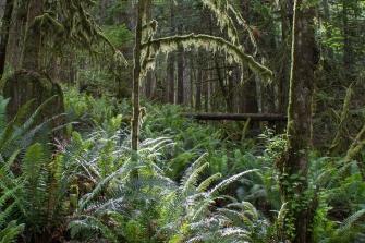 Rainforest Trail to Skookumchuck Narrows