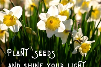 Plant-seeds-and-shine-your-light
