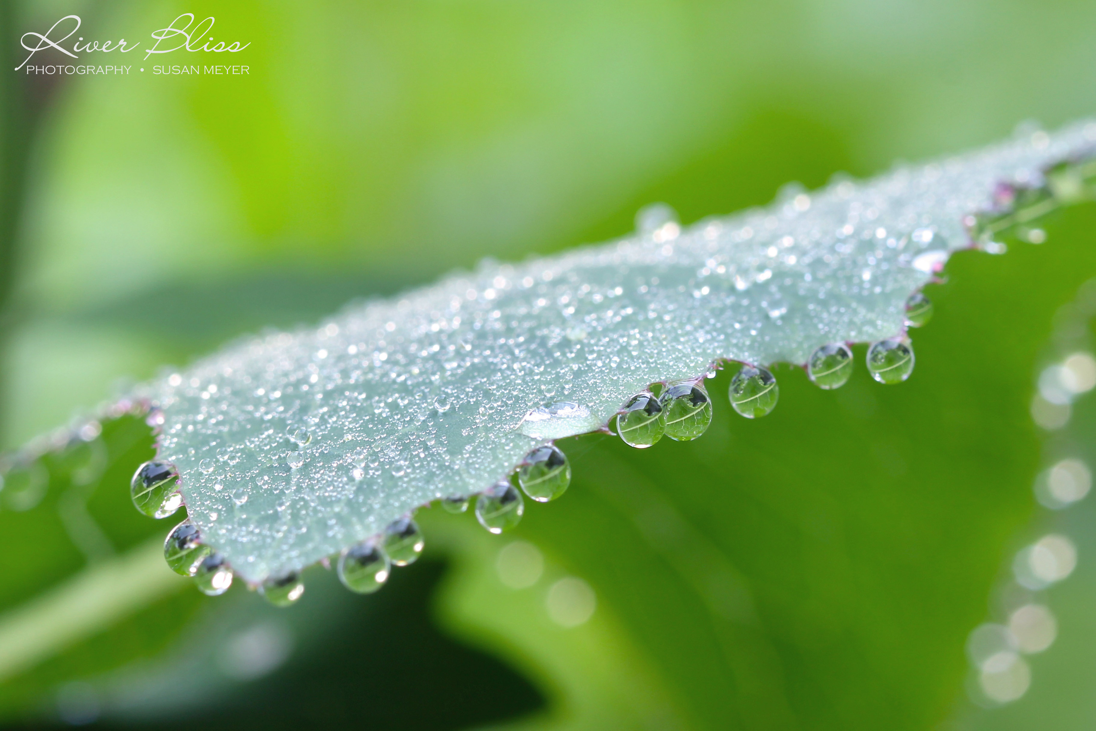 Through Day-Blooms and Beads of Dew