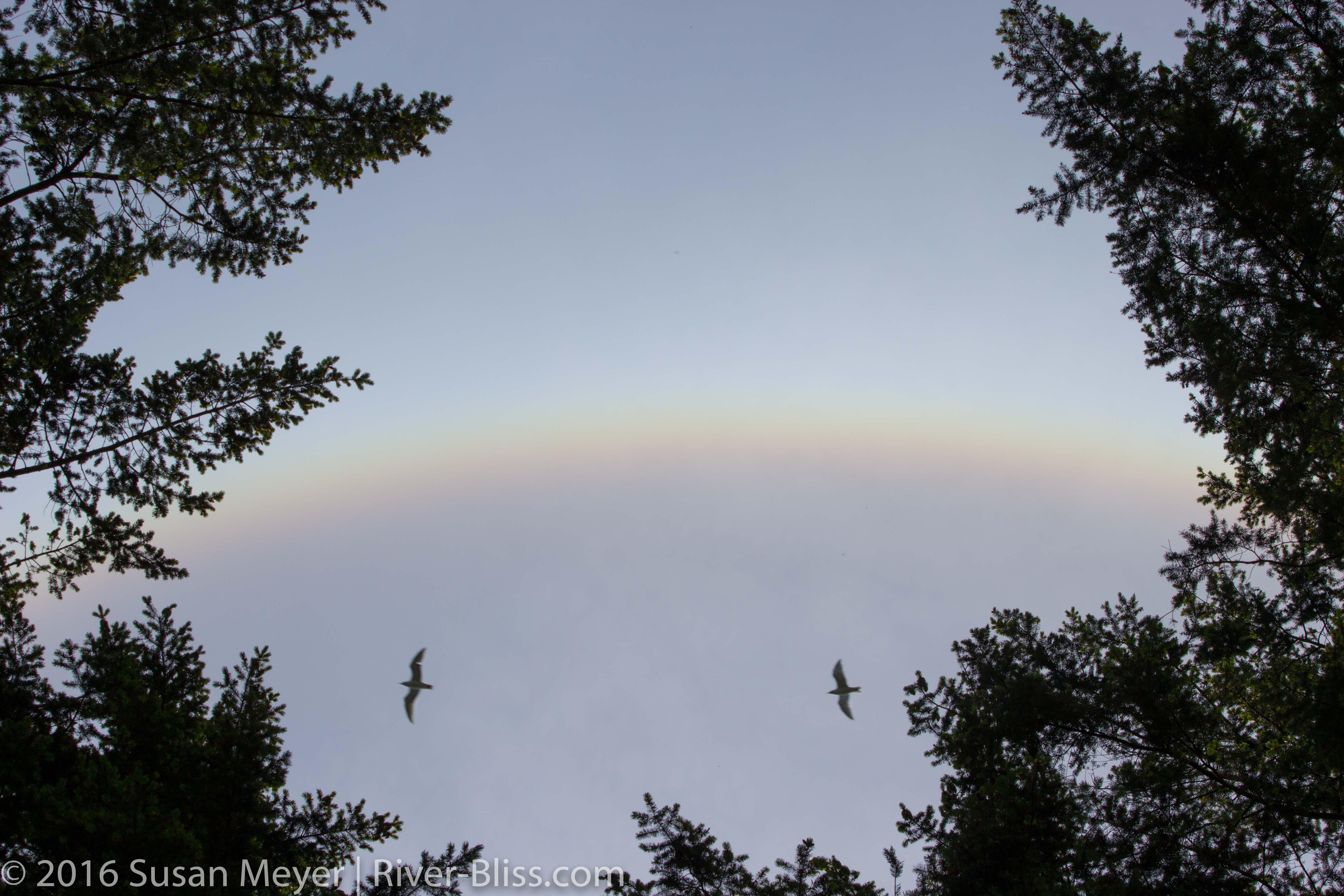 Rainbow Seagulls