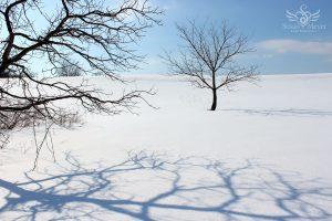 Bones of Winter