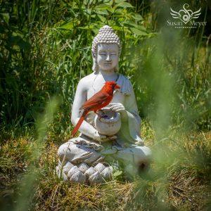 Cardinal on Buddha Bowl