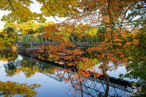 Dix Bridge in Autumn