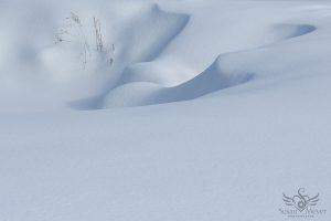 Freshly Fallen Snowdrifts