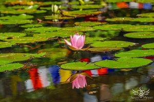 Reflection of a Zen Pond