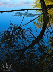 Summer Reflection