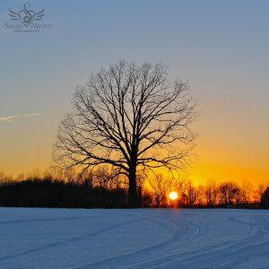 Sunset Winter Tree Silhouette