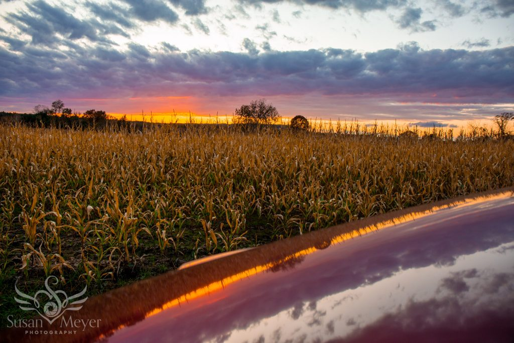 Cornfield sunset reflected on car hood